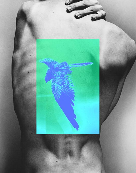 david_marinos-bird_view